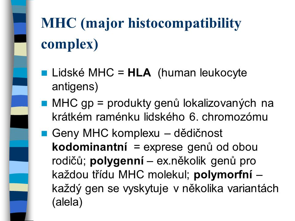 MHC (major histocompatibility complex) Lidské MHC = HLA (human leukocyte antigens) MHC gp = produkty genů lokalizovaných na krátkém raménku lidského 6.
