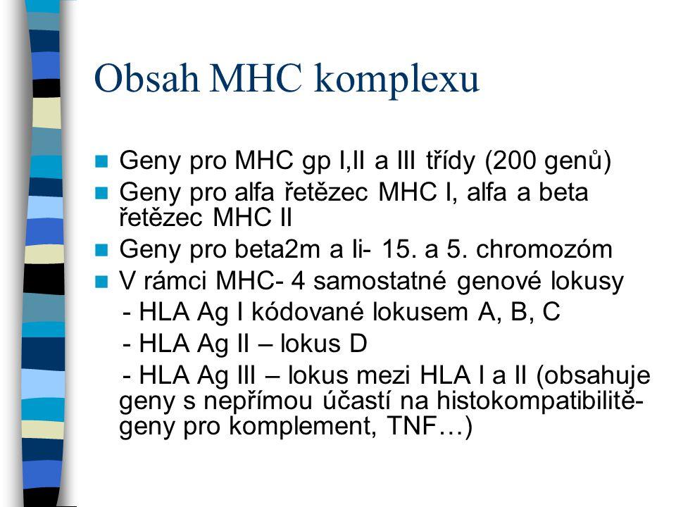 Obsah MHC komplexu Geny pro MHC gp I,II a III třídy (200 genů) Geny pro alfa řetězec MHC I, alfa a beta řetězec MHC II Geny pro beta2m a Ii- 15. a 5.