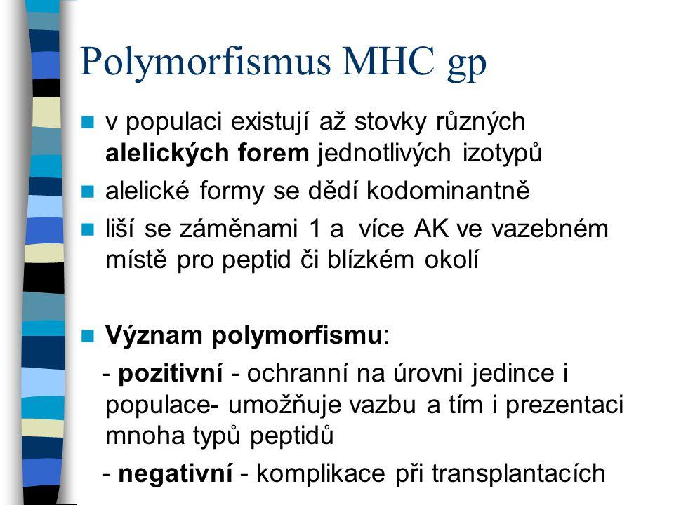 Polymorfismus MHC gp v populaci existují až stovky různých alelických forem jednotlivých izotypů alelické formy se dědí kodominantně liší se záměnami