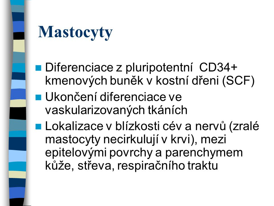 Mastocyty Diferenciace z pluripotentní CD34+ kmenových buněk v kostní dřeni (SCF) Ukončení diferenciace ve vaskularizovaných tkáních Lokalizace v blíz