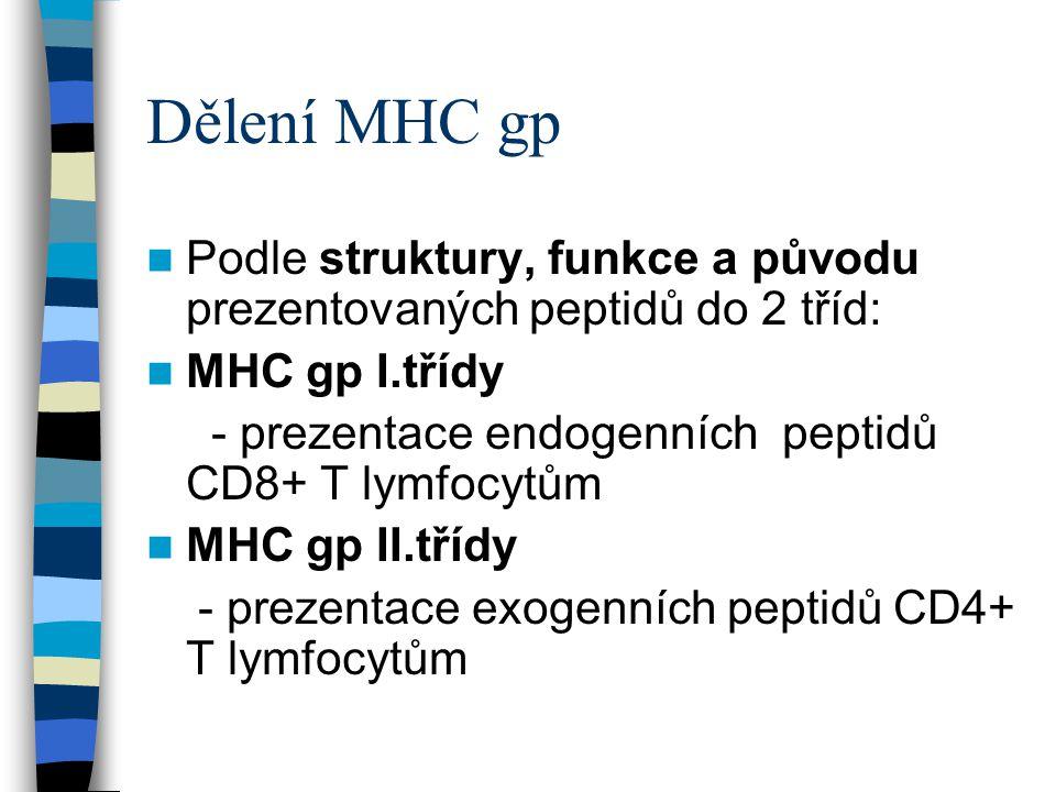 Dělení MHC gp Podle struktury, funkce a původu prezentovaných peptidů do 2 tříd: MHC gp I.třídy - prezentace endogenních peptidů CD8+ T lymfocytům MHC