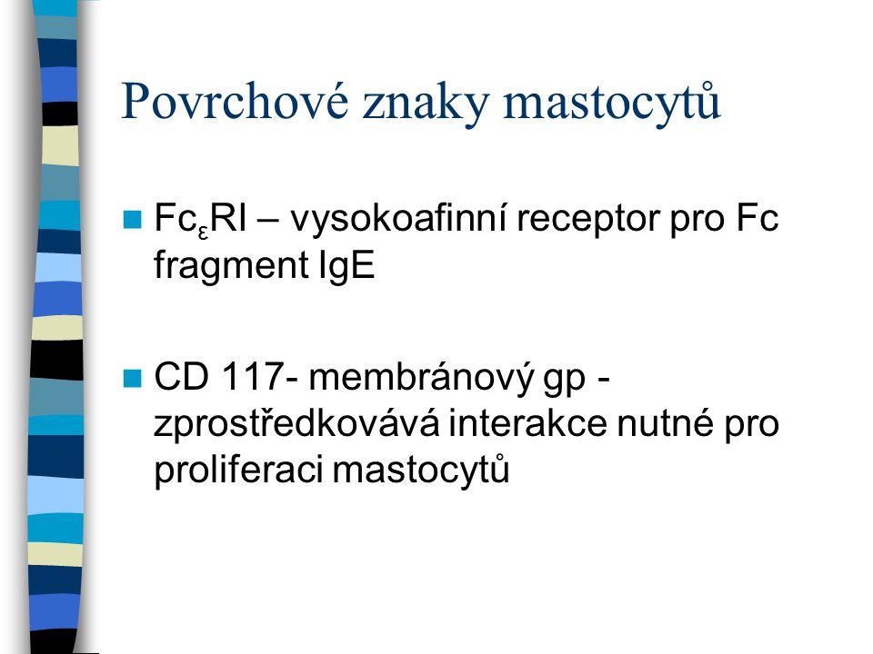 Povrchové znaky mastocytů Fc ε RI – vysokoafinní receptor pro Fc fragment IgE CD 117- membránový gp - zprostředkovává interakce nutné pro proliferaci