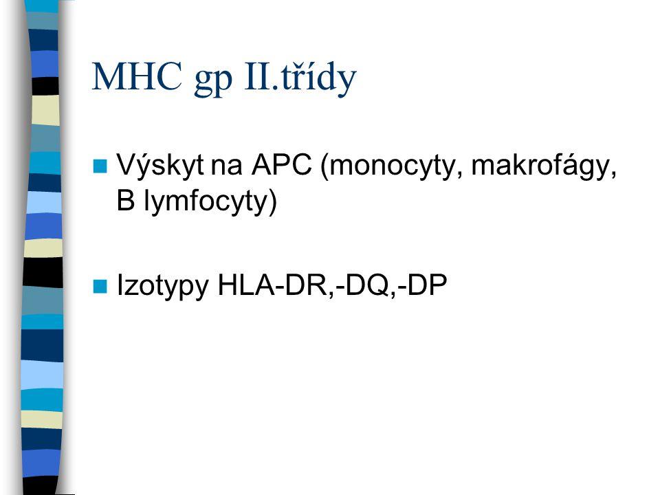 MHC gp II.třídy Výskyt na APC (monocyty, makrofágy, B lymfocyty) Izotypy HLA-DR,-DQ,-DP