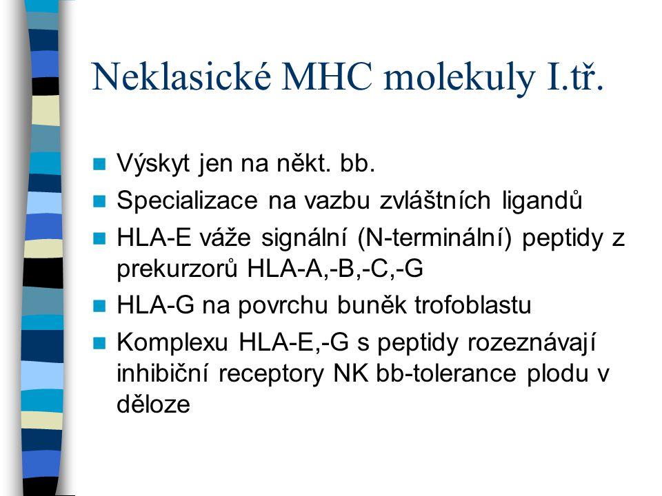Neklasické MHC molekuly I.tř. Výskyt jen na někt. bb. Specializace na vazbu zvláštních ligandů HLA-E váže signální (N-terminální) peptidy z prekurzorů