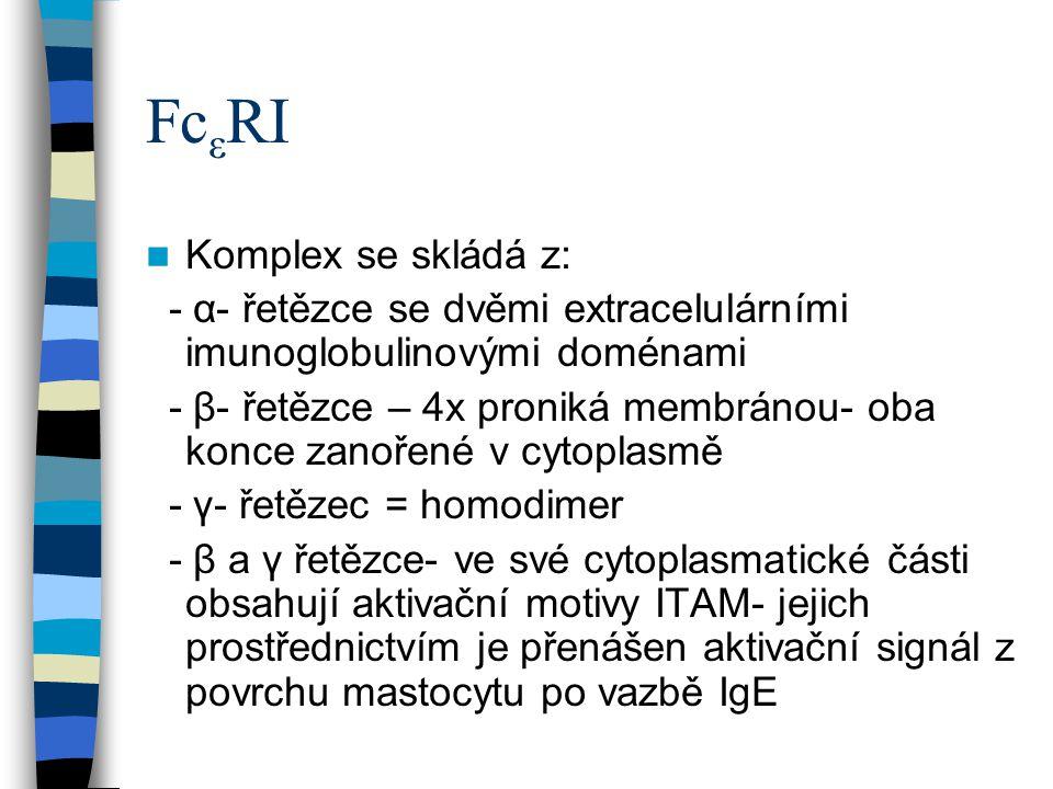 Fc ε RI Komplex se skládá z: - α- řetězce se dvěmi extracelulárními imunoglobulinovými doménami - β- řetězce – 4x proniká membránou- oba konce zanořen