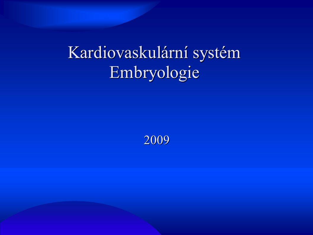 Kardiovaskulární systém Embryologie 2009