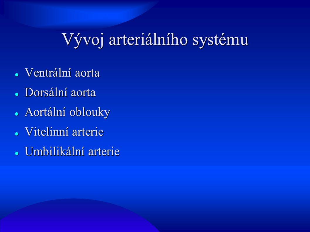 Vývoj arteriálního systému Ventrální aorta Ventrální aorta Dorsální aorta Dorsální aorta Aortální oblouky Aortální oblouky Vitelinní arterie Vitelinní