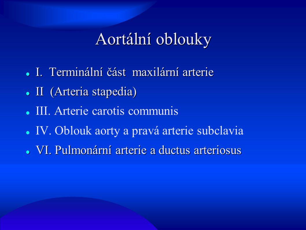 Aortální oblouky I. Terminální část maxilární arterie I. Terminální část maxilární arterie II (Arteria stapedia) II (Arteria stapedia) III. Arterie ca