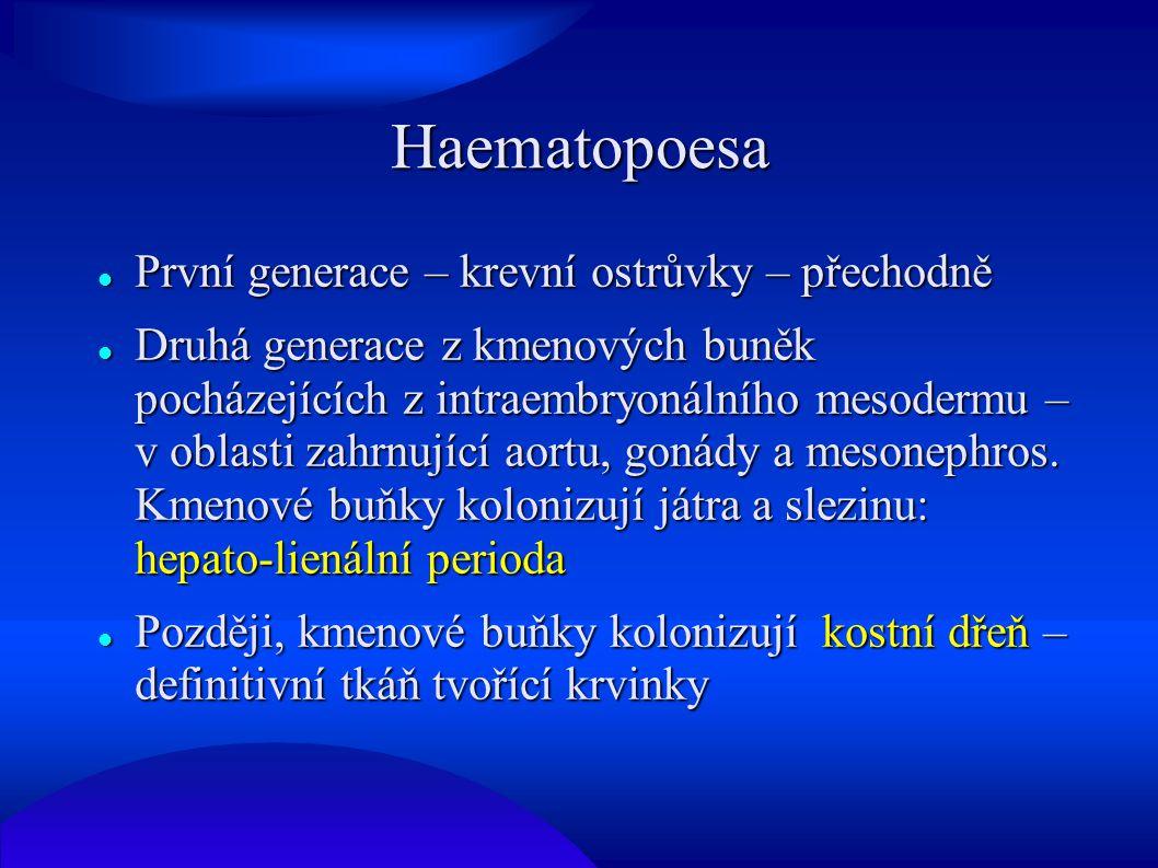 Haematopoesa První generace – krevní ostrůvky – přechodně První generace – krevní ostrůvky – přechodně Druhá generace z kmenových buněk pocházejících