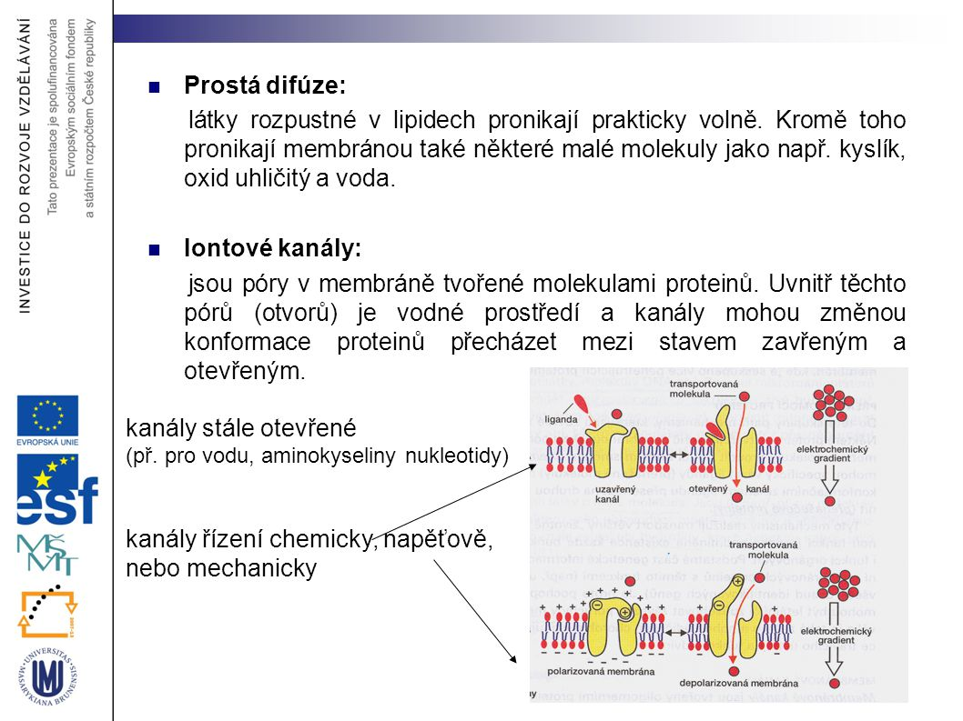 Prostá difúze: látky rozpustné v lipidech pronikají prakticky volně. Kromě toho pronikají membránou také některé malé molekuly jako např. kyslík, oxid