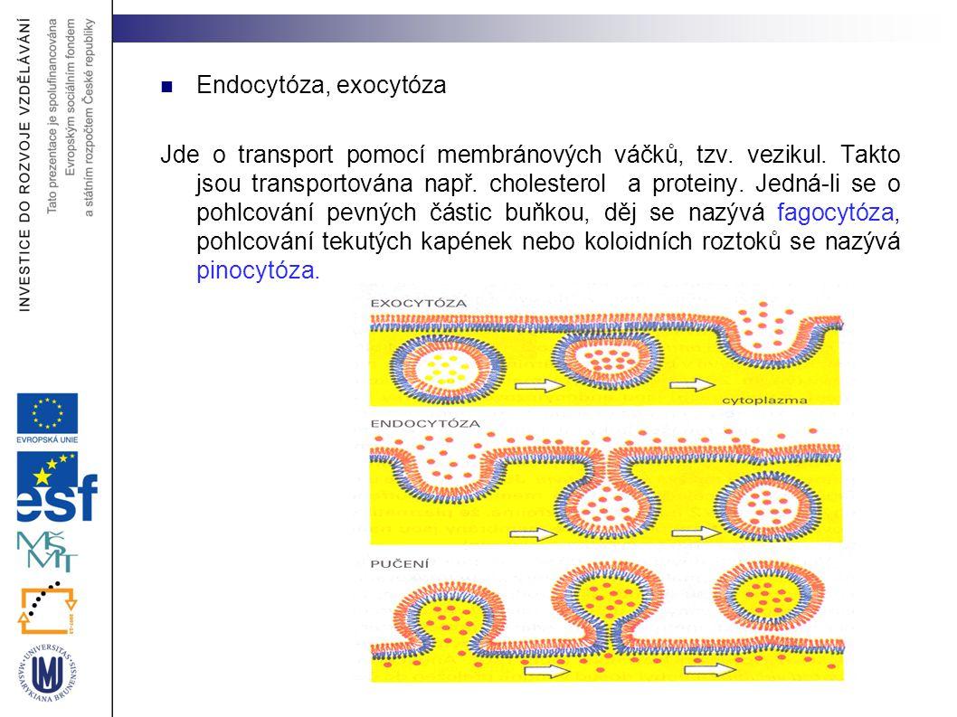 Endocytóza, exocytóza Jde o transport pomocí membránových váčků, tzv. vezikul. Takto jsou transportována např. cholesterol a proteiny. Jedná-li se o p