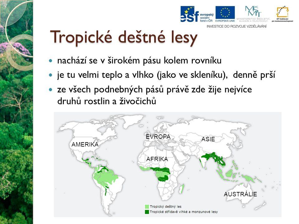 """Tropické deštné lesy říká se jim """"plíce planety , protože vytvářejí velké množství kyslíku (většinu jej však znovu spotřebují hlavně při hynutí a rozkladu) území lesů se zmenšuje zásahem lidí, kteří chtějí získat úrodnou půdu, budovat silnice, těžit vzácné dřevo"""