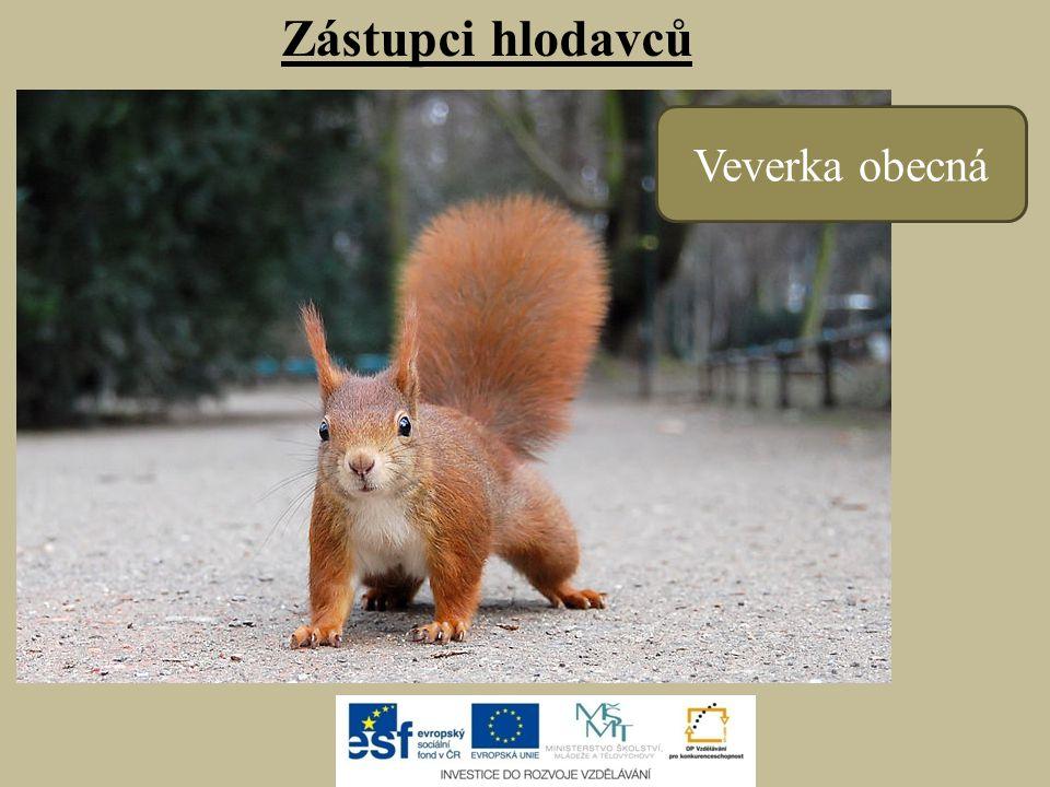 - v Česku chráněný zákonem - hluboké nory - lícní torby (slouží k přenášení např.