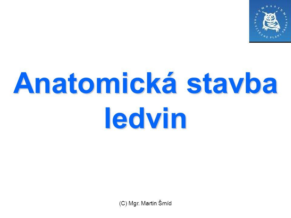 (C) Mgr. Martin Šmíd Anatomická stavba ledvin