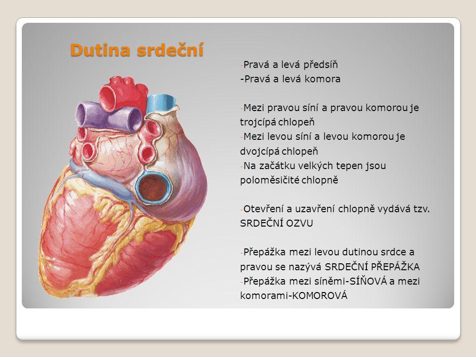 Dutina srdeční - Pravá a levá předsíň -Pravá a levá komora - Mezi pravou síní a pravou komorou je trojcípá chlopeň - Mezi levou síní a levou komorou j