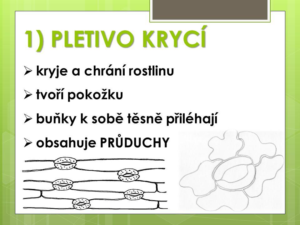 2) PLETIVO VODIVÉ  jen u vyšších rostlin  tvořeno cévními svazky  vedou roztoky v látek v rostlinách