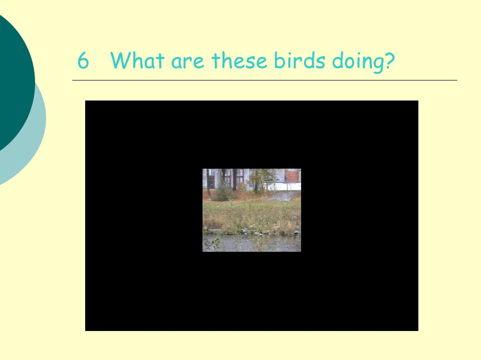 6 What are these birds doing