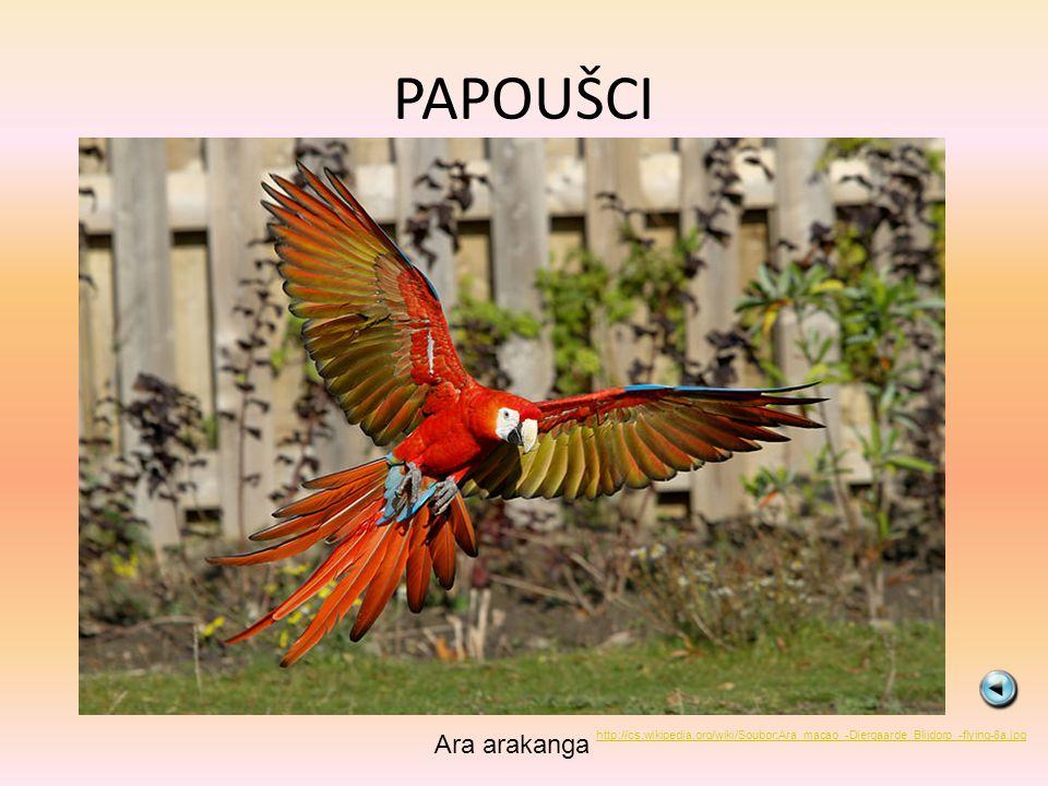PAPOUŠCI Ara arakanga http://cs.wikipedia.org/wiki/Soubor:Ara_macao_-Diergaarde_Blijdorp_-flying-8a.jpg