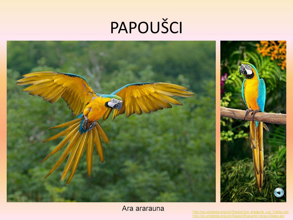 PAPOUŠCI Ara ararauna http://cs.wikipedia.org/wiki/Soubor:Ara_ararauna_Luc_Viatour.jpg http://cs.wikipedia.org/wiki/Soubor:Blue-and-Yellow-Macaw.jpg