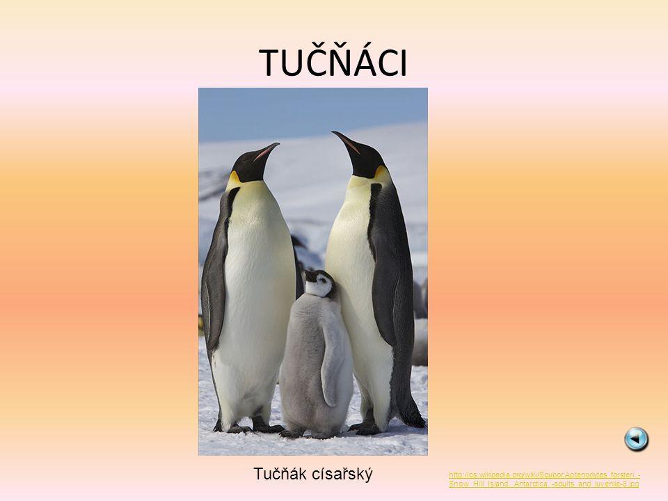 TUČŇÁCI Tučňák císařský http://cs.wikipedia.org/wiki/Soubor:Aptenodytes_forsteri_- Snow_Hill_Island,_Antarctica_-adults_and_juvenile-8.jpg