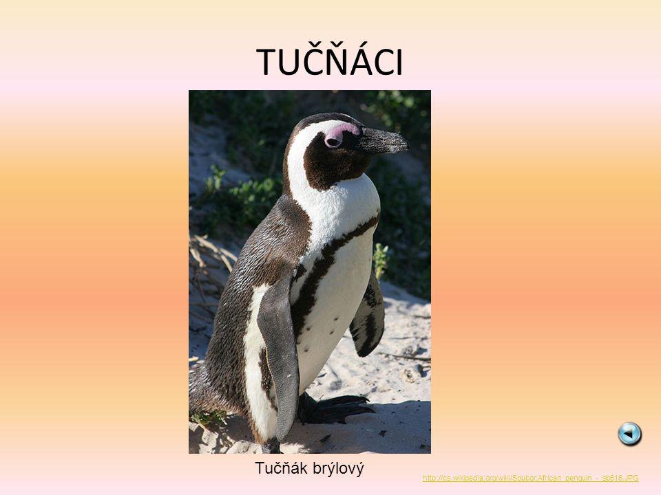 TUČŇÁCI Tučňák brýlový http://cs.wikipedia.org/wiki/Soubor:African_penguin_-_sb616.JPG