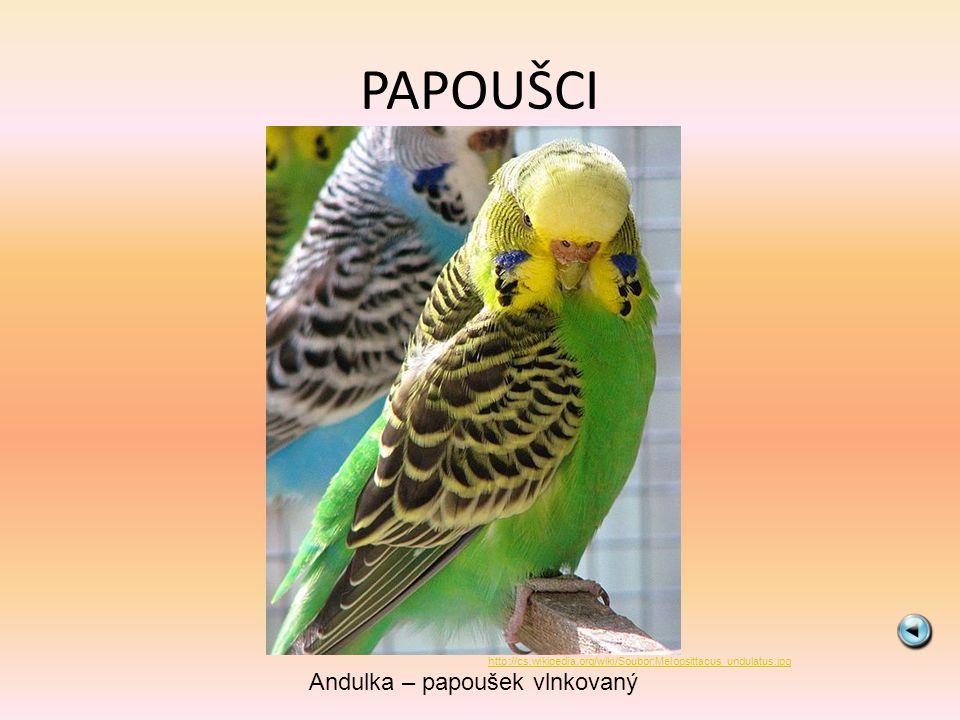 PAPOUŠCI Andulka – papoušek vlnkovaný http://cs.wikipedia.org/wiki/Soubor:Melopsittacus_undulatus.jpg