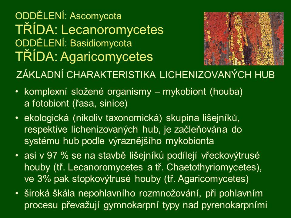 ZÁKLADNÍ CHARAKTERISTIKA LICHENIZOVANÝCH HUB ODDĚLENÍ: Ascomycota TŘÍDA: Lecanoromycetes ODDĚLENÍ: Basidiomycota TŘÍDA: Agaricomycetes komplexní slože