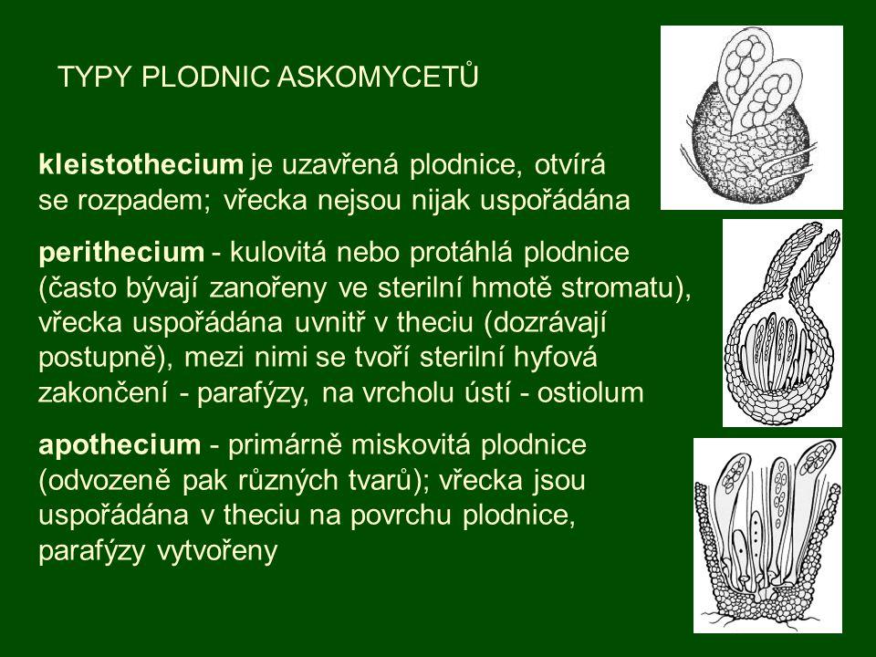 TYPY PLODNIC ASKOMYCETŮ kleistothecium je uzavřená plodnice, otvírá se rozpadem; vřecka nejsou nijak uspořádána perithecium - kulovitá nebo protáhlá p