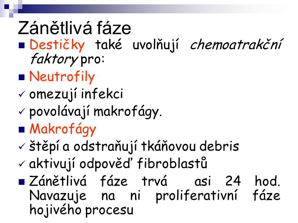 Zánětlivá fáze Destičky také uvolňují chemoatrakční faktory pro: Neutrofily omezují infekci povolávají makrofágy. Makrofágy štěpí a odstraňují tkáňovo