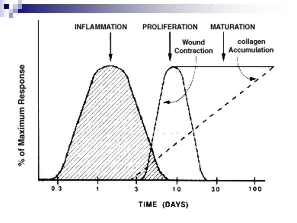Hojení se může zpozdit několika faktory: Ischémie Suché okolí rány Infekce Cizí tělesa Protizánětlivá terapie Nutriční deficity