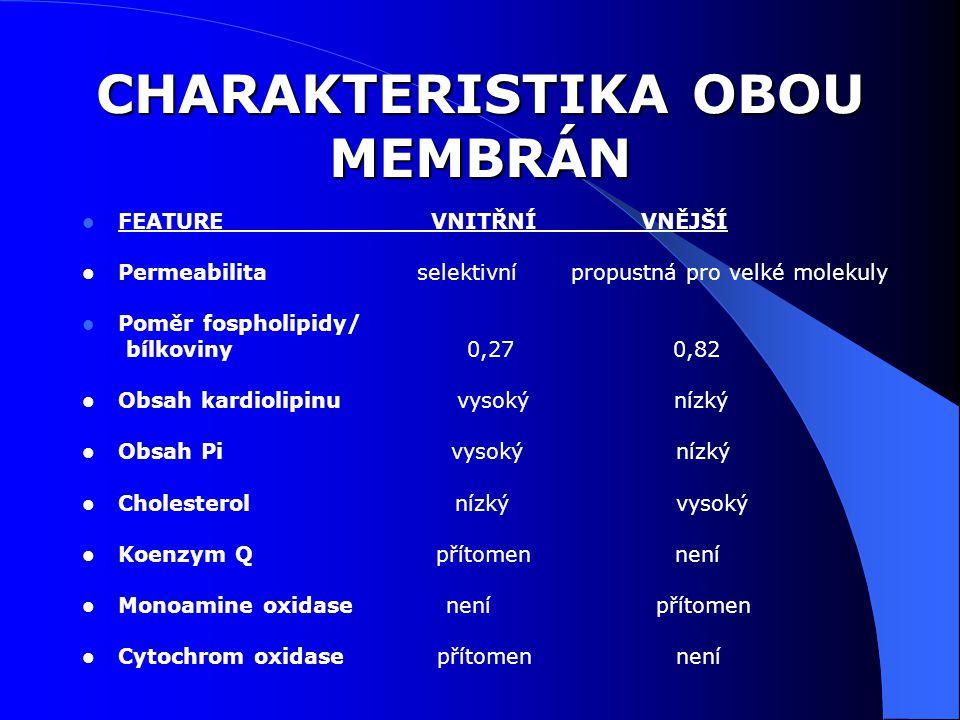 CHARAKTERISTIKA OBOU MEMBRÁN FEATURE VNITŘNÍ VNĚJŠÍ Permeabilita selektivní propustná pro velké molekuly Poměr fospholipidy/ bílkoviny 0,27 0,82 Obsah kardiolipinu vysoký nízký Obsah Pi vysoký nízký Cholesterol nízký vysoký Koenzym Q přítomen není Monoamine oxidase není přítomen Cytochrom oxidase přítomen není