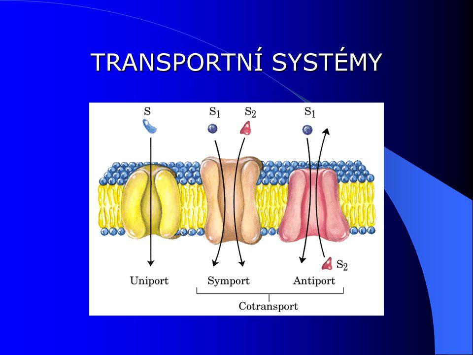 METABOLICKÉ DRÁHY LOKALIZOVÁNY V MITOCHONDRIÍCH MEZIMEMBRÁNOVÝ PROSTOR: Zde je pH nižší, protože se ionty vodíku z matrixu do mezimembránového prostoru ADP se pohybuje k matrixu pomoci adenin nukleotidového transportéru 2 ADP ATP + AMP) ADP je fosforylován v matrixu