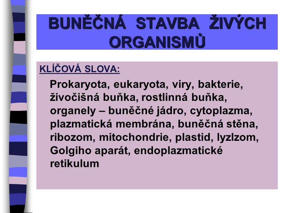 BUNĚČNÁ STAVBA ŽIVÝCH ORGANISMŮ KLÍČOVÁ SLOVA: Prokaryota, eukaryota, viry, bakterie, živočišná buňka, rostlinná buňka, organely – buněčné jádro, cytoplazma, plazmatická membrána, buněčná stěna, ribozom, mitochondrie, plastid, lyzlzom, Golgiho aparát, endoplazmatické retikulum