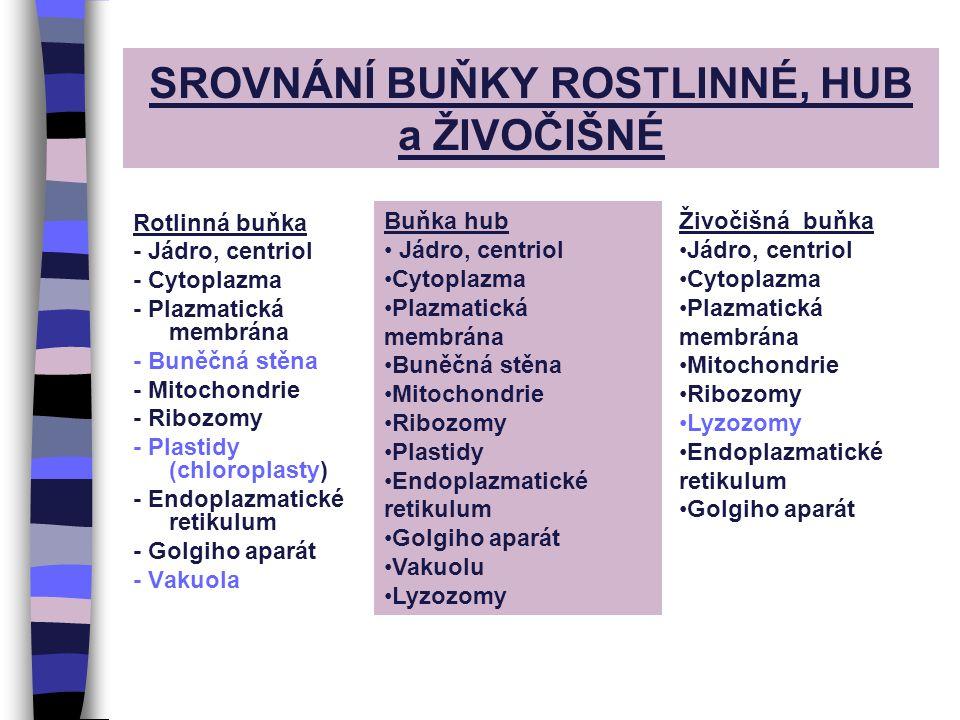 SROVNÁNÍ BUŇKY ROSTLINNÉ, HUB a ŽIVOČIŠNÉ Rotlinná buňka - Jádro, centriol - Cytoplazma - Plazmatická membrána - Buněčná stěna - Mitochondrie - Ribozomy - Plastidy (chloroplasty) - Endoplazmatické retikulum - Golgiho aparát - Vakuola Buňka hub Jádro, centriol Cytoplazma Plazmatická membrána Buněčná stěna Mitochondrie Ribozomy Plastidy Endoplazmatické retikulum Golgiho aparát Vakuolu Lyzozomy Živočišná buňka Jádro, centriol Cytoplazma Plazmatická membrána Mitochondrie Ribozomy Lyzozomy Endoplazmatické retikulum Golgiho aparát
