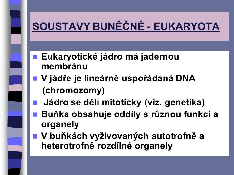 SOUSTAVY BUNĚČNÉ - EUKARYOTA Eukaryotické jádro má jadernou membránu V jádře je lineárně uspořádaná DNA (chromozomy) Jádro se dělí mitoticky (viz.