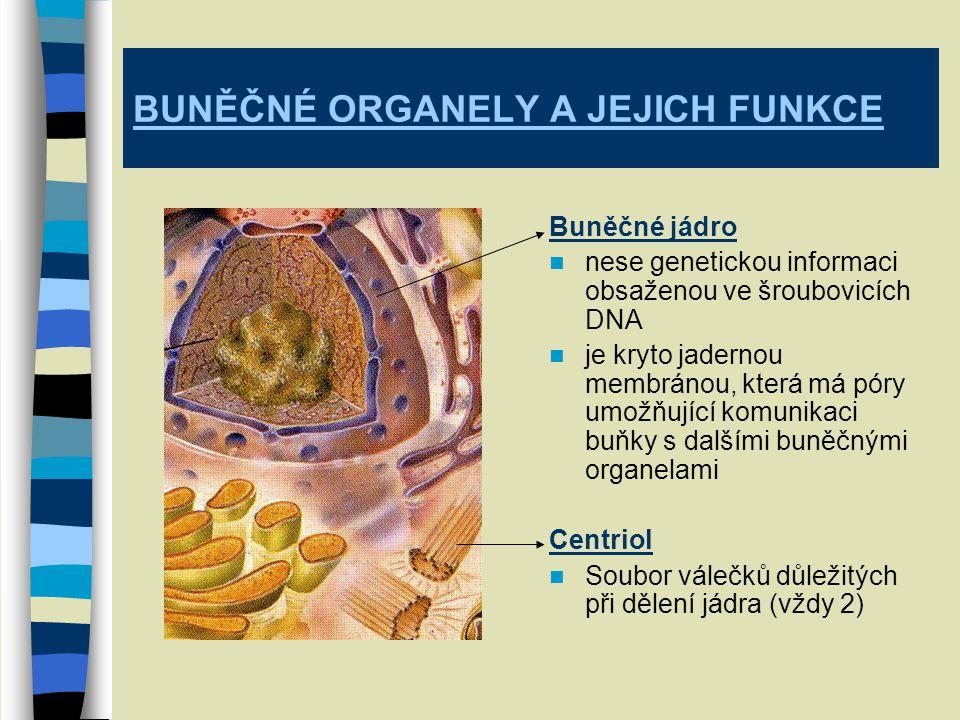 BUNĚČNÉ ORGANELY A JEJICH FUNKCE Buněčné jádro nese genetickou informaci obsaženou ve šroubovicích DNA je kryto jadernou membránou, která má póry umožňující komunikaci buňky s dalšími buněčnými organelami Centriol Soubor válečků důležitých při dělení jádra (vždy 2)