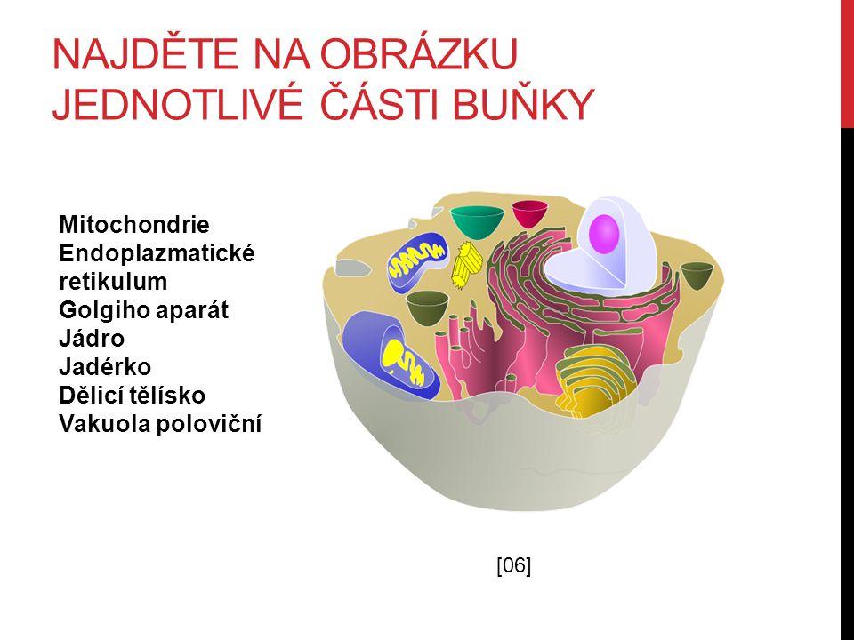 NAJDĚTE NA OBRÁZKU JEDNOTLIVÉ ČÁSTI BUŇKY [06] Mitochondrie Endoplazmatické retikulum Golgiho aparát Jádro Jadérko Dělicí tělísko Vakuola poloviční
