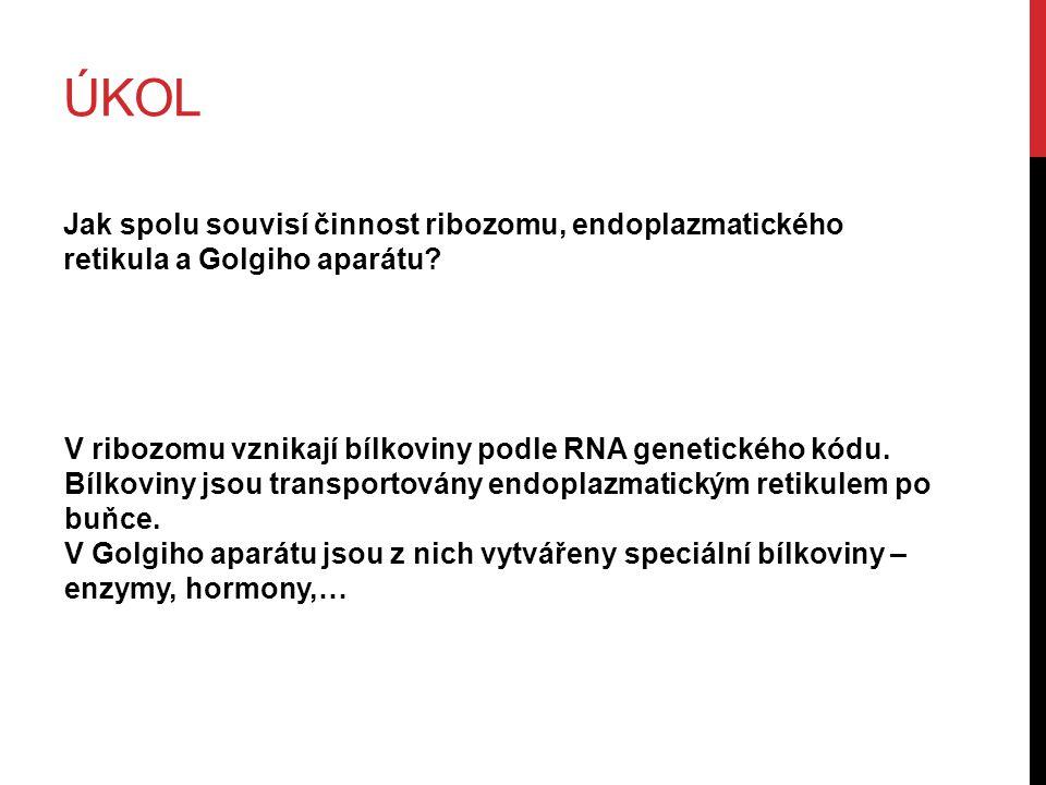 ÚKOL Jak spolu souvisí činnost ribozomu, endoplazmatického retikula a Golgiho aparátu.