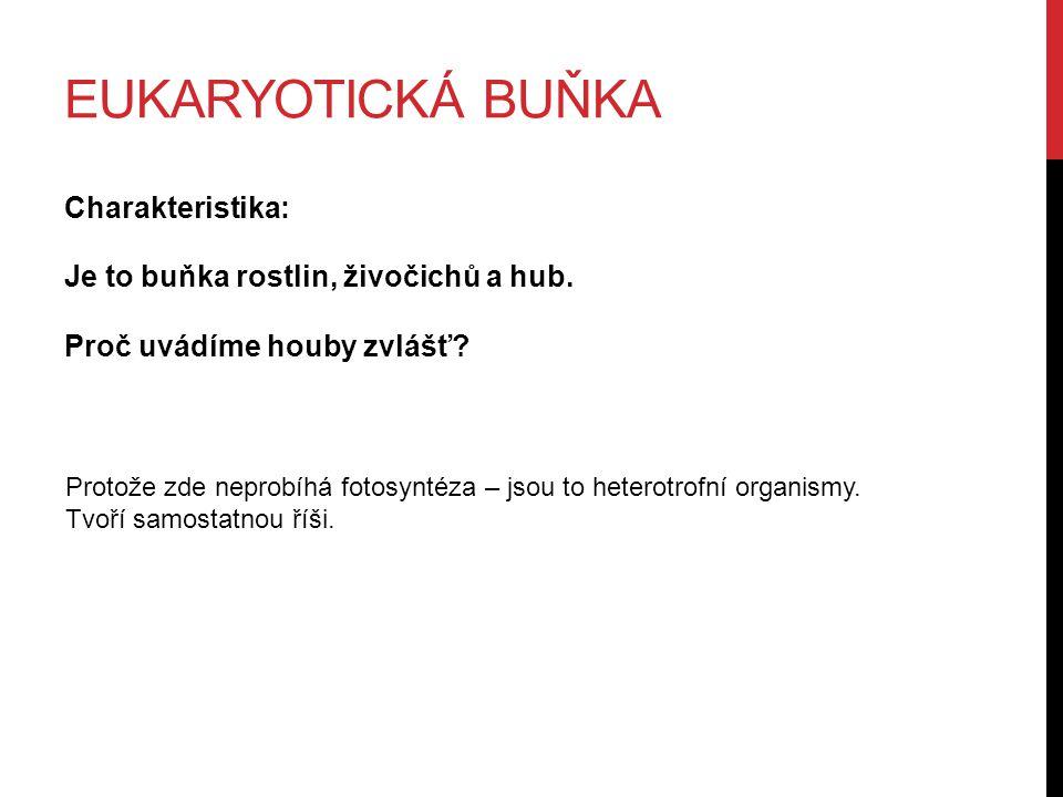 EUKARYOTICKÁ BUŇKA Charakteristika: Je to buňka rostlin, živočichů a hub.