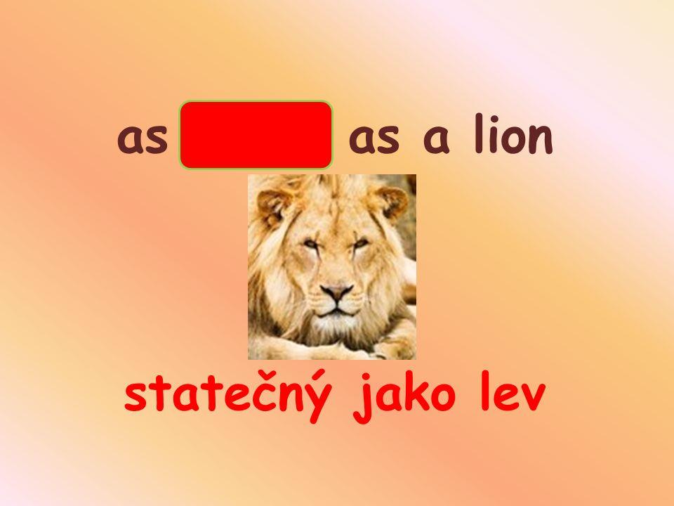 as brave as a lion statečný jako lev