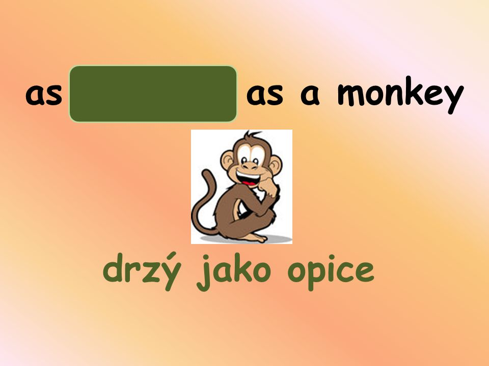 as arrogant as a monkey drzý jako opice