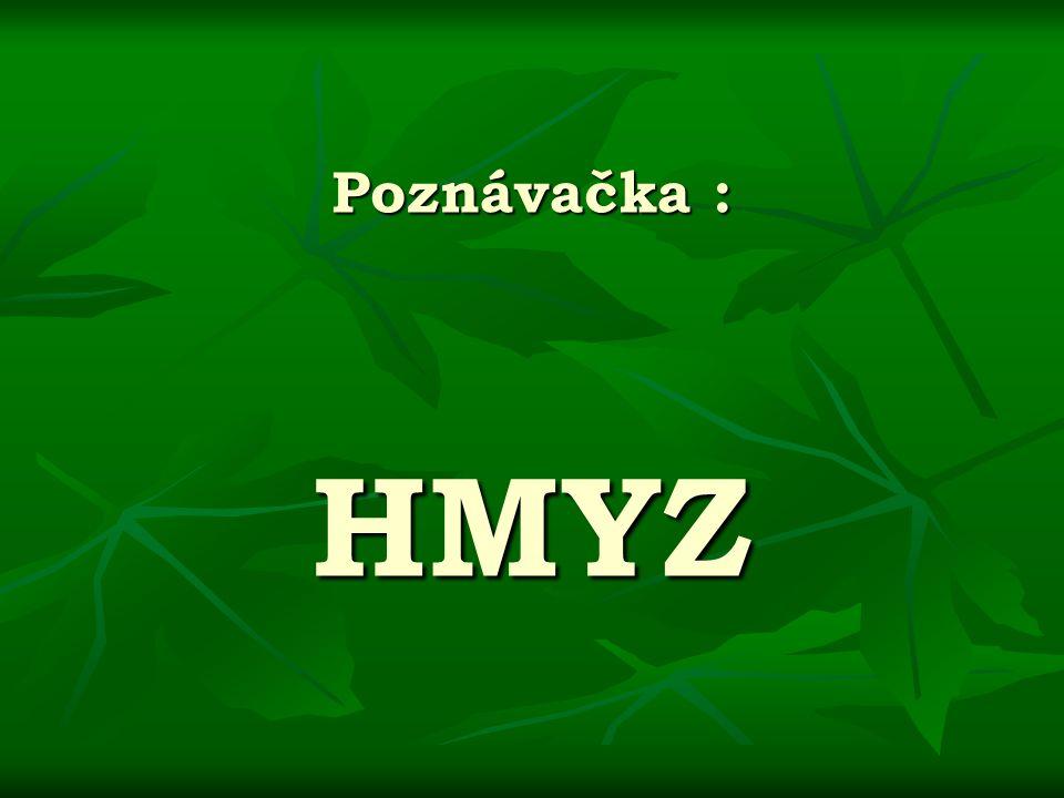 Poznávačka : HMYZ