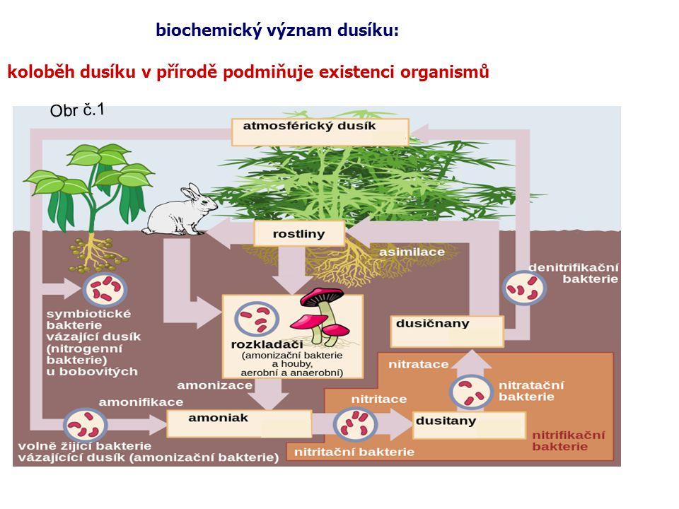 biochemický význam dusíku: koloběh dusíku v přírodě podmiňuje existenci organismů Obr č.1