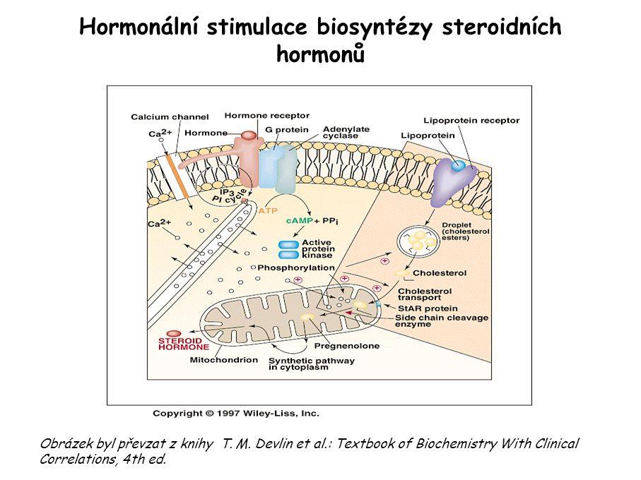 Hormonální stimulace biosyntézy steroidních hormonů Obrázek byl převzat z knihy T.