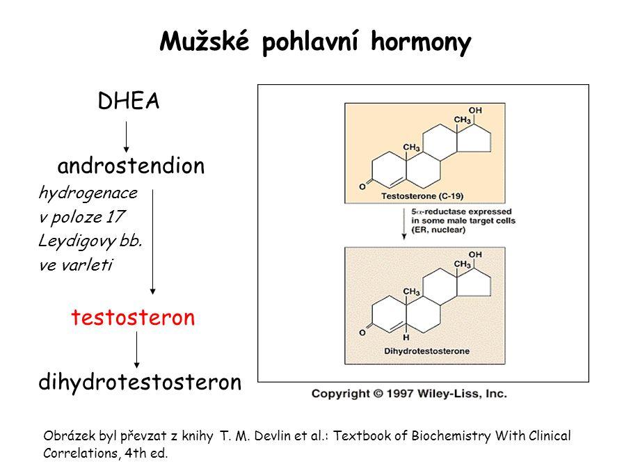 Mužské pohlavní hormony DHEA androstendion hydrogenace v poloze 17 Leydigovy bb.