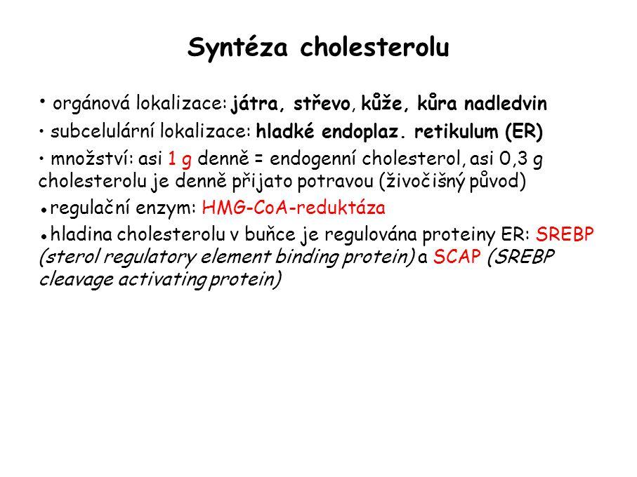 Syntéza cholesterolu orgánová lokalizace: játra, střevo, kůže, kůra nadledvin subcelulární lokalizace: hladké endoplaz.