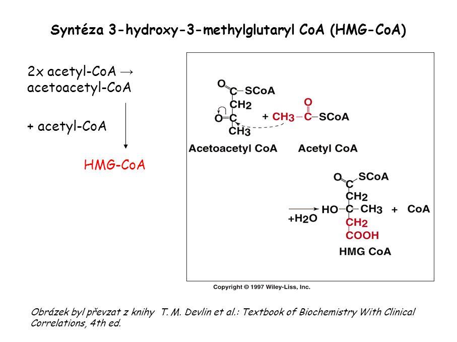 Vznik mevalonátu redukce HMG-CoA pomocí NADPH + H + na mevalonát klíčový regulační enzym: HMG-CoA-reduktáza Obrázek byl převzat z knihy T.