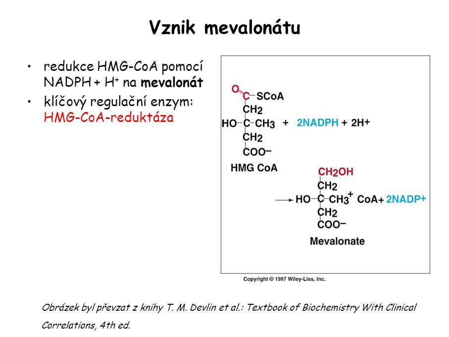 """Syntéza izopentenyldifosfátu fosforylace mevalonátu (2 ATP) → mevalonyldifosfát → dekarboxylace za účasti ATP → izopentenyldifosfát (""""aktivní izopren ) Obrázek byl převzat z knihy T."""