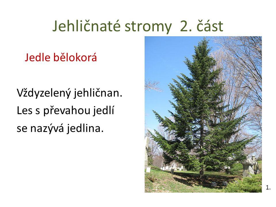 Jehličnaté stromy 2. část Jedle bělokorá Vždyzelený jehličnan. Les s převahou jedlí se nazývá jedlina. 1.