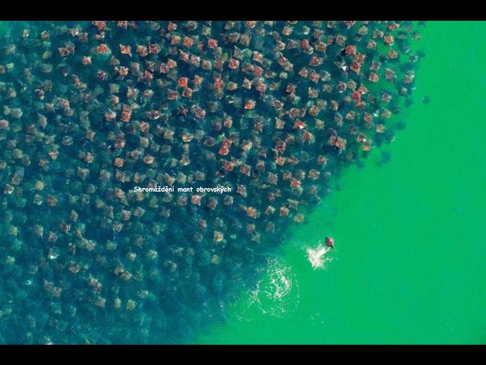 145 vodních lyžařů ve vleku za jedinou lodí